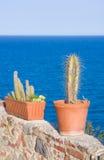 在墙壁上的装饰仙人掌庭院在海附近 免版税图库摄影