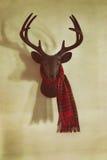 在墙壁上的登上的鹿头 图库摄影