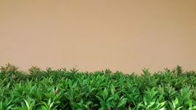 在墙壁上的绿色叶子 库存图片