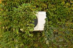 在墙壁上的绿色常春藤有空调器的 免版税库存图片