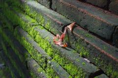 在墙壁上的绿色Mos 免版税图库摄影