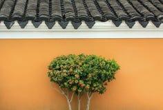 在墙壁前面的一棵植物 免版税库存图片