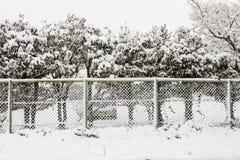 在墙壁后的雪树 免版税库存图片