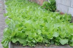 在墙壁旁边的很多新鲜的绿色菜 免版税库存照片