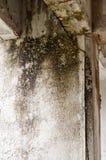 在墙壁湿气的模子 免版税库存照片