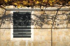 在墙壁的秋天 免版税库存照片