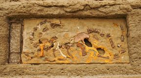 在墙壁的骨头在Puerto Pirà ¡ mides在PenÃnsula Valdés 库存图片