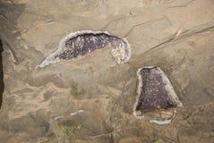 在墙壁的Geode 免版税图库摄影