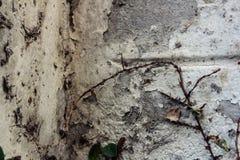 在墙壁,织地不很细背景上的野生杂草 免版税图库摄影