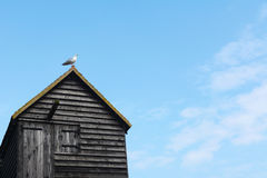 在墙板渔小屋的屋顶的海鸥 库存照片