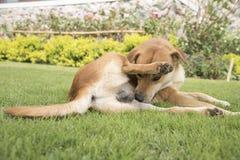 在墙纸概念的背景的狗 免版税库存照片