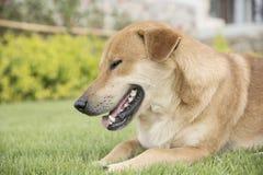 在墙纸概念的背景的狗 免版税库存图片