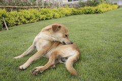 在墙纸概念的背景的狗 免版税图库摄影