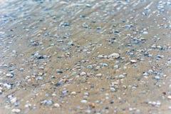 在墨西哥海滩的沙钱 库存照片