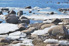 在墨西哥湾海岸的春天 免版税图库摄影