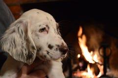 在壁炉光的甜宠物 图库摄影
