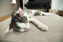 在壁炉前面的睡觉小猫 库存照片