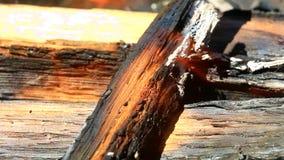 在壁炉的燃烧的木头 股票录像