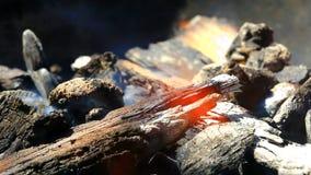 在壁炉的燃烧的木头 影视素材