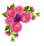 在壁角安排的翠菊花 免版税库存图片
