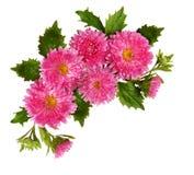 在壁角构成的翠菊花 免版税图库摄影