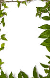 在壁角框架绿色叶子附近 库存图片