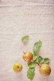 在壁角葡萄酒布料的三个新鲜的甜苹果 库存图片