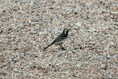 在壳海海滩的海鸟 库存照片