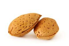 在壳的二个杏仁 库存照片