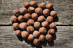 在壳的几颗榛子在木背景 免版税图库摄影