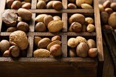 在壳的各种各样的坚果 库存照片