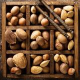 在壳的各种各样的坚果 图库摄影
