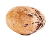 在壳的唯一山核桃果 库存图片