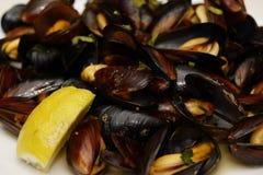 在壳的地中海淡菜煮沸用在板材的酒 免版税库存照片