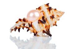 在壳的大珍珠 免版税库存照片