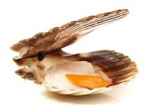 在壳的扇贝 免版税库存照片