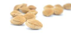 在壳的杏仁 图库摄影