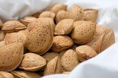 在壳的杏仁 免版税库存照片