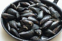 在壳的淡菜 库存照片