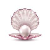 在壳的珍珠 图库摄影