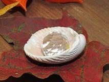 在壳的秋天珍珠 库存图片