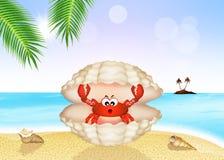 在壳的螃蟹 库存图片