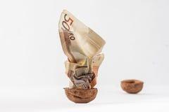 在壳的被弄皱的金钱核桃 图库摄影