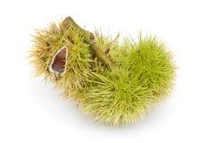 在壳的Chesnuts 免版税库存图片
