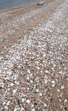 在壳盖的科罗拉多河海岸线 库存图片