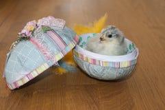 在复活节彩蛋里面的一只小的鸡 免版税库存图片