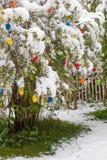 在复活节的突然的寒流与在灌木的新鲜的下落的雪与e 库存图片