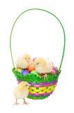 在复活节篮子的小鸡 免版税库存照片