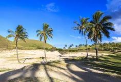 在复活节岛,智利的椰子树 免版税库存照片