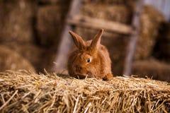 在复活节彩蛋在丝绒草,兔子wi中的滑稽的小的兔子 库存图片